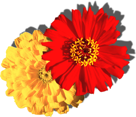 flowers_9906.png